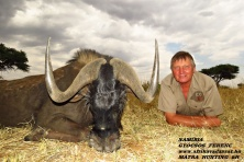 Black Wildebeest 2020